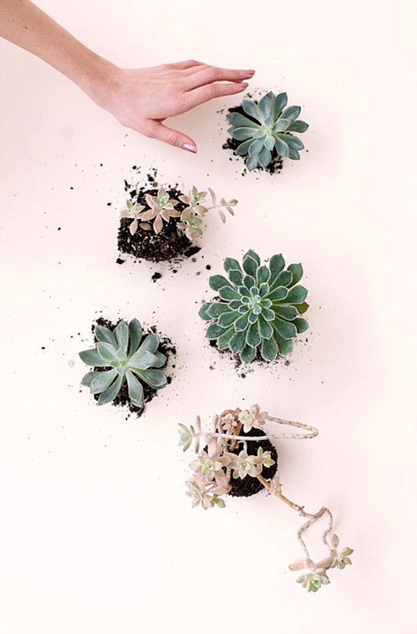 Collection of succulents