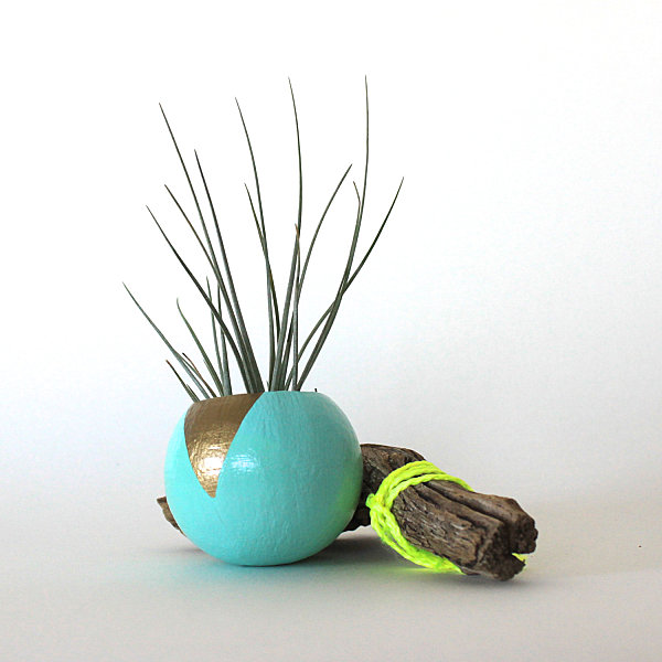 Colorful painted air plant pod