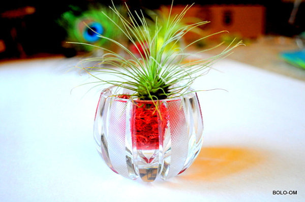 Crystal air plant terrarium