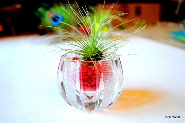 Crystal air plant terrarium