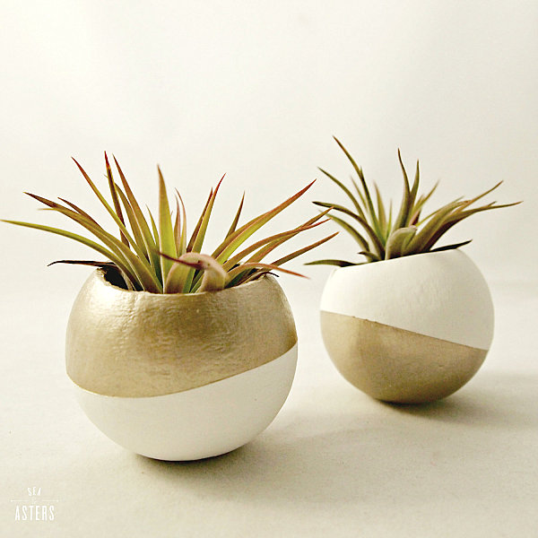 Gold and white air plant pods