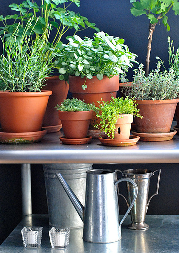 Herb garden in a sunny room