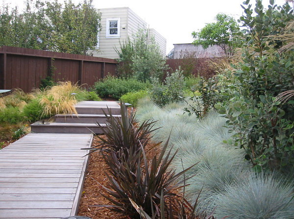 Native grasses in a modern yard