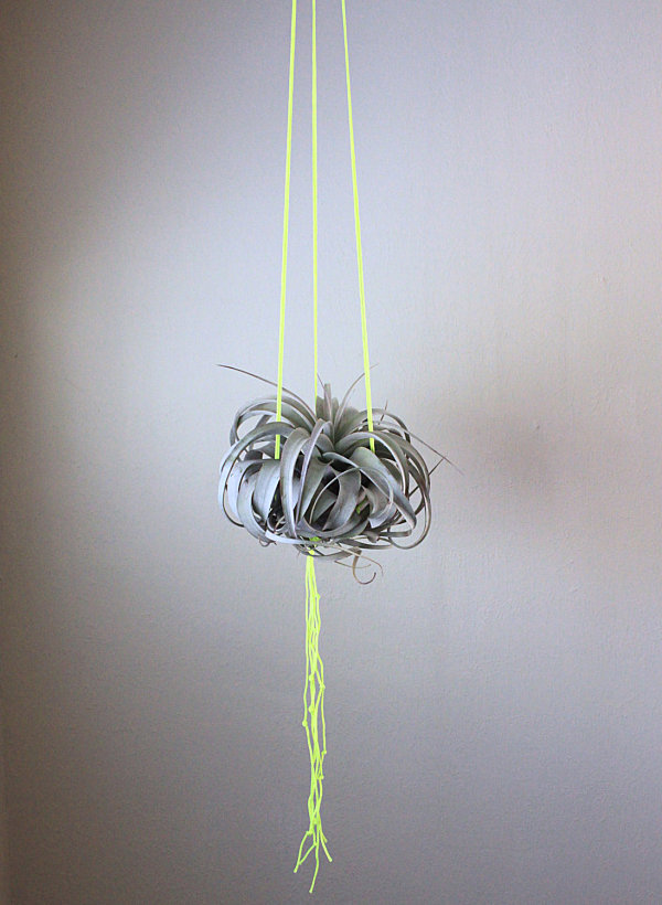 Neon yellow macrame air plant holder