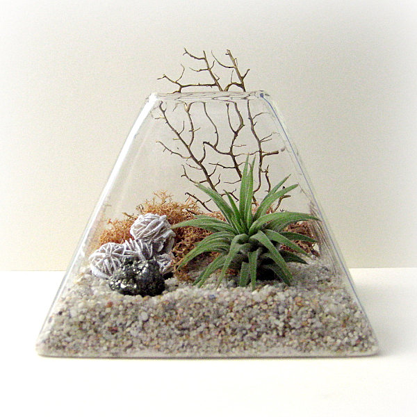 Pyramid air plant terrarium