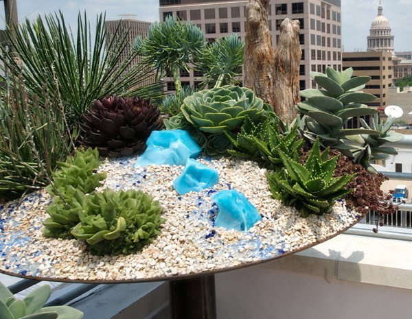 Stunning succulent planter arrangement