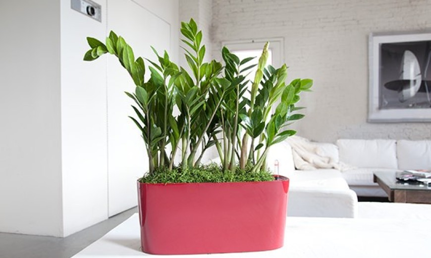 Best indoor flowering plants for office 18 best large Best small office plants