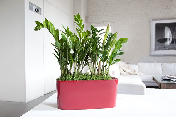 Choosing the best indoor plants for your interior - Plant decorating ideas tasteful nature ...