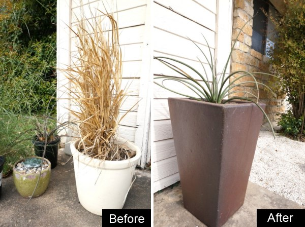 A potted plant update