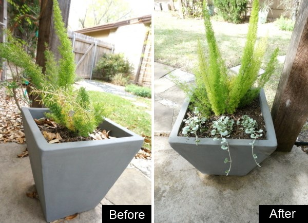 Adding ground cover to a potted fern