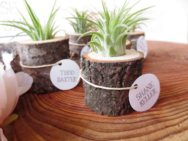 View in gallery Air plant in a tree stump