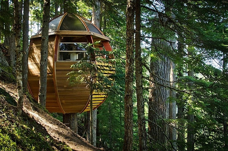 Amazing little cabin hangs from the treetops