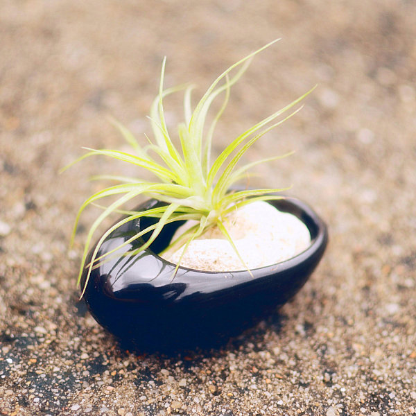 Black ceramic air plant holder