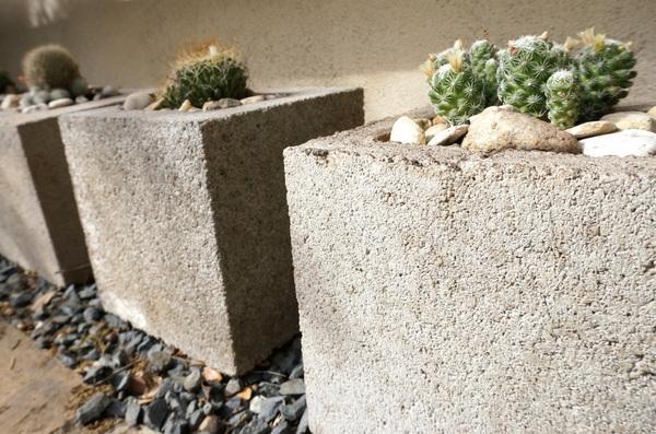 Cacti in cinder block planters