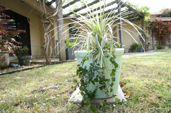 Cascading plants in a spring yard