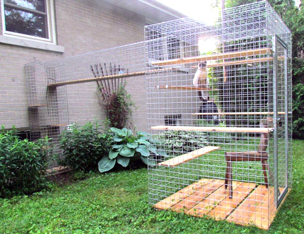 Catio with climbing ledges