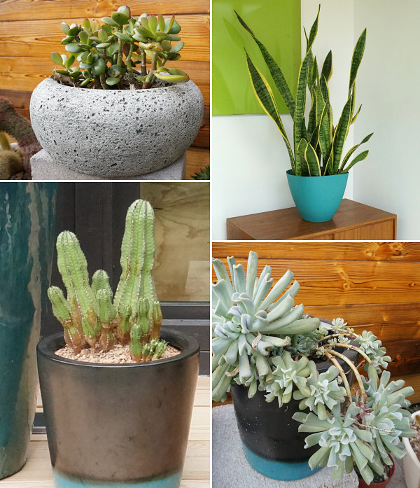 Collection of potted succulents 10 Unique Decorative Accents That Make A Big Difference