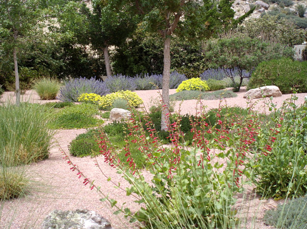 Extensive xeriscaping on an albuquerque property