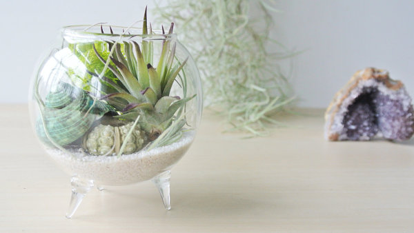 Footed air plant terrarium