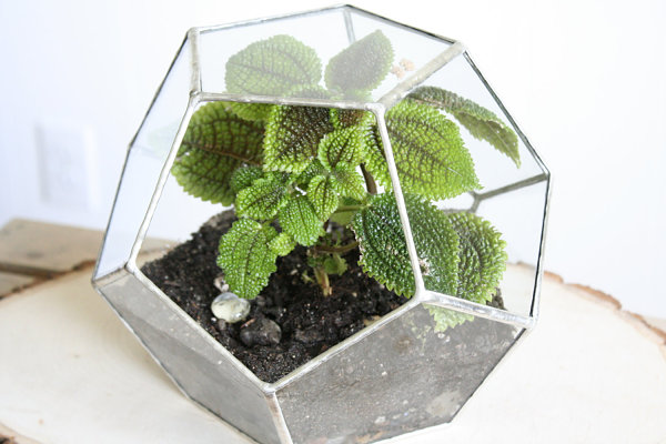 Glass geometric air plant terrarium