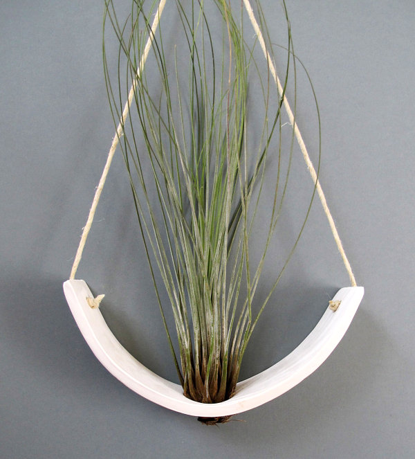 Hanging air plant cradle