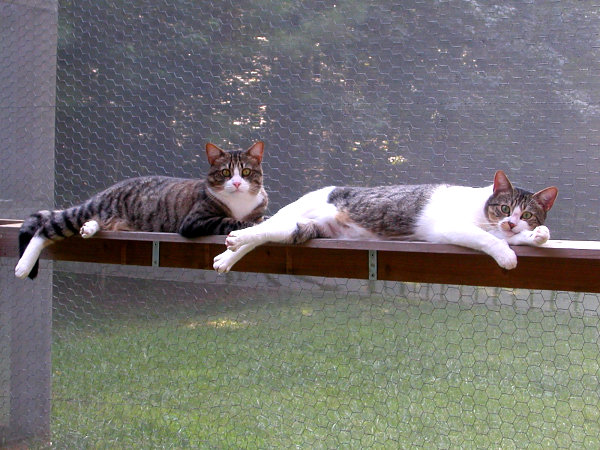 Happy kitties lounging on their catio