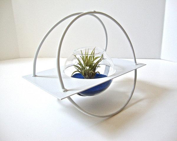 Modern air plant terrarium