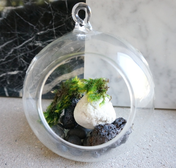 Plant terrarium with black and white stones