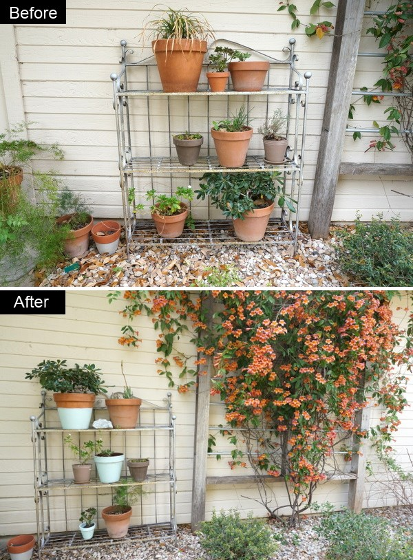 Potted plants get a makeover