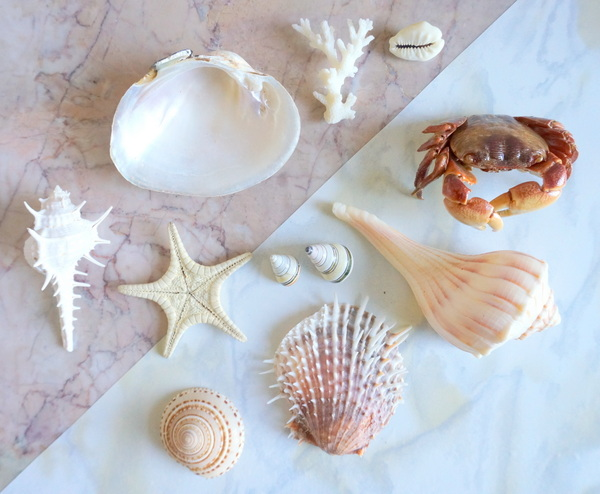 Seashell collection How To Turn A Collection Of Natural Wonders Into Design Gold
