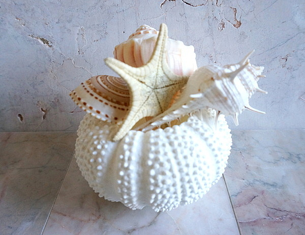 Seashells in a sea urchin