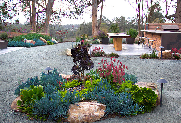 Striking use of color in a xeriscaped yard