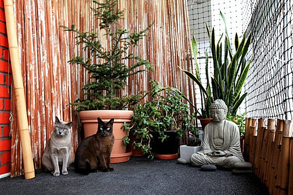 Stylish catio with ample plants
