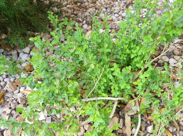 Trimming plants freshens the yard