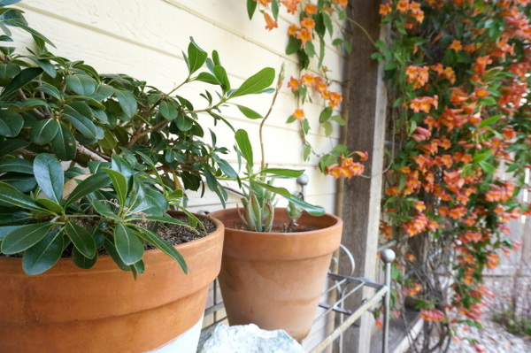 Vines and potted plants