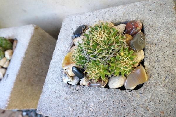 When pebbles meet plants