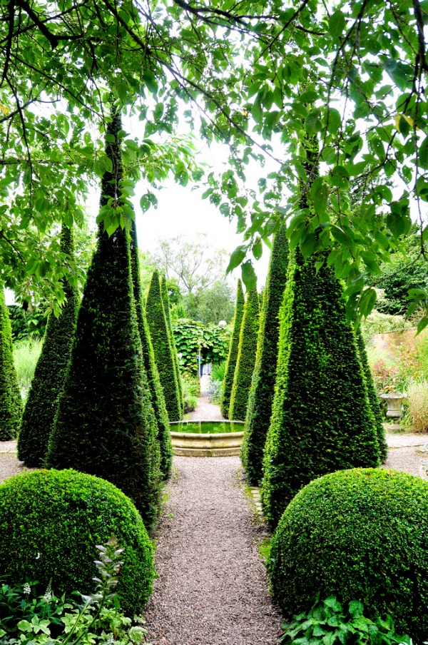 angular boxwood garden