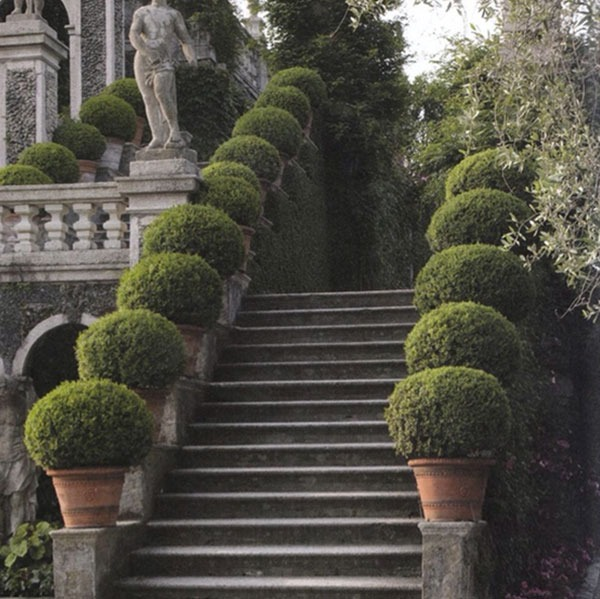 potted boxwood garden