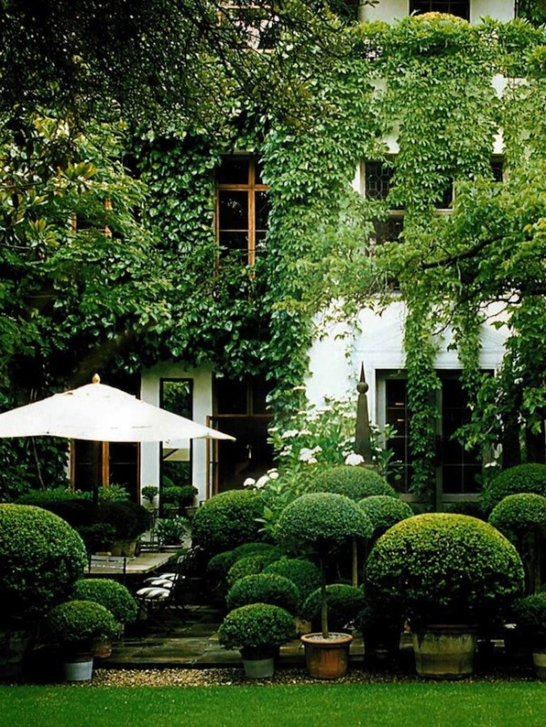 rounded boxwood landscape