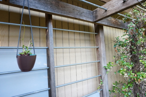 A touch of gray on a modern trellis