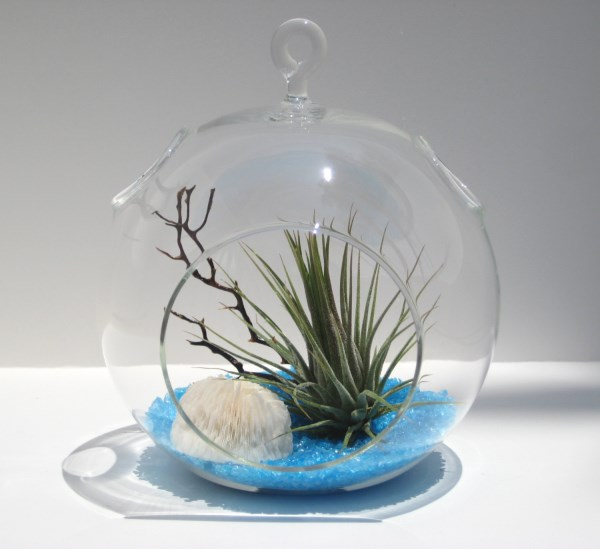 View in gallery Air plant terrarium with blue recycled glass