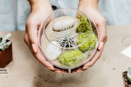 Create An Unforgettable Air Plant Terrarium