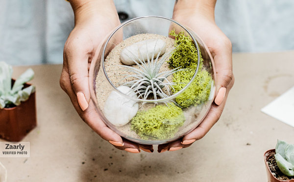 Air plant terrarium with sand and rocks