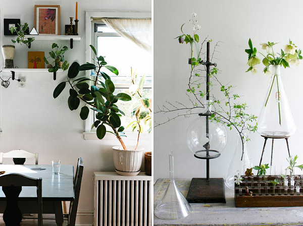Artful displays of indoor plants