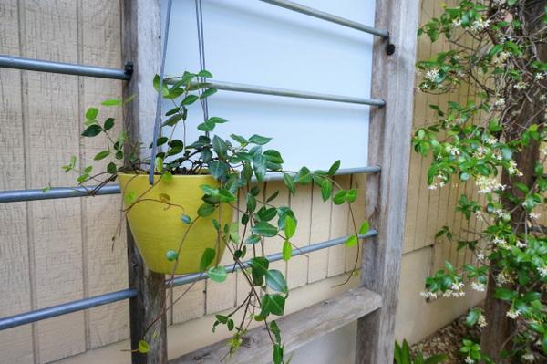Cascading plants add much-needed greenery