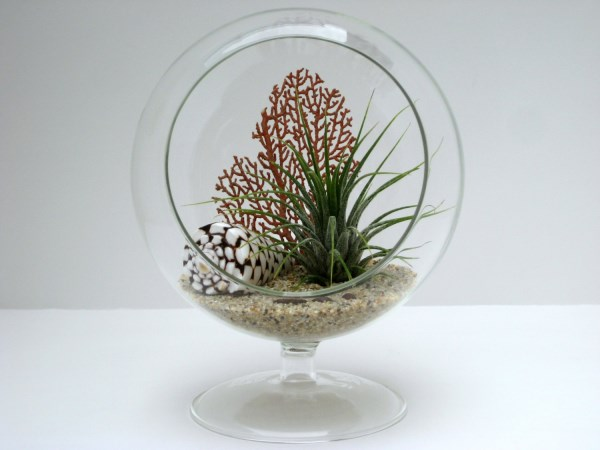 Footed air plant terrarium with shell