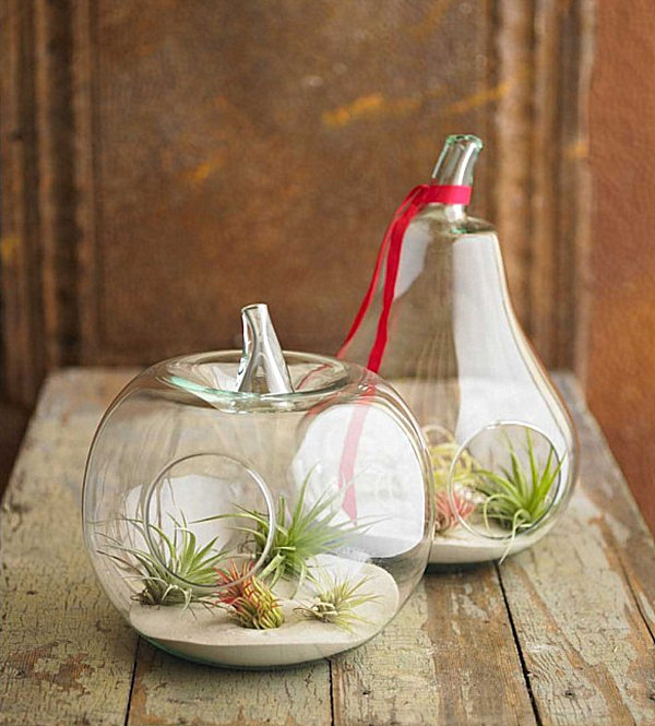 Fruit-shaped air plant terrariums