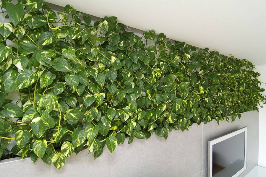 Gorgeous living wall idea for the modern home