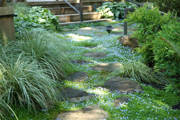 Ground cover and stones