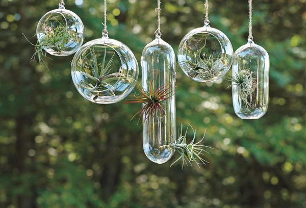 Hanging air plant garden